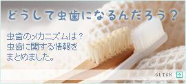 虫歯に関する情報はこちら